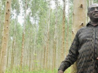 Kakuru grows money on trees