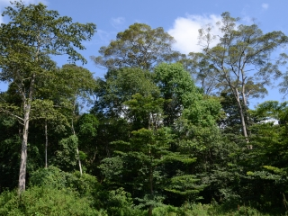 Mabira Central Forest Reserve in Buikwe district