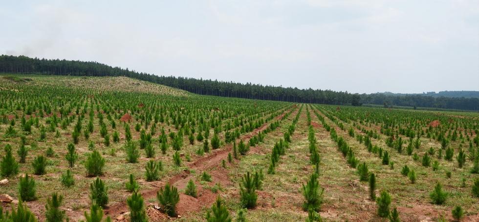 Busoga Forests Company
